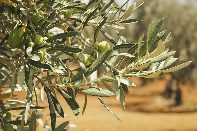 Olives and Virgin Olive Day with Peka Lunch at OPG Vukojevic