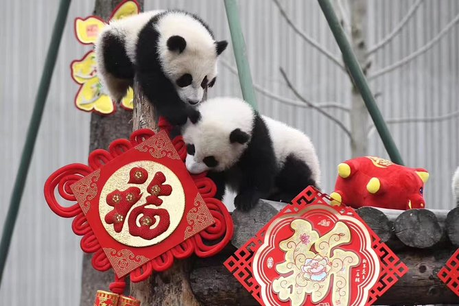 One-Day Private Country Biking and Panda Tour Around Qingcheng Mountain