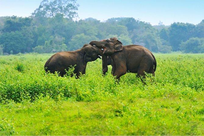 Private Tour: Udawalawe Elephant Safari from Colombo