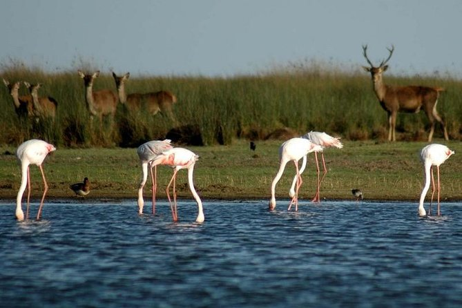 Full-Day Donana National Park Tour from Seville