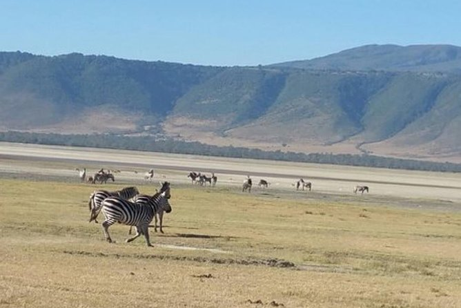 Tanzania Day Tour to Ngorongoro Crater- Lowest Price