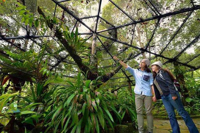 Kinabalu National Park Tour From Kota Kinabalu