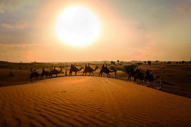 Dubai Sunset Camel Trekking With BBQ Dinner