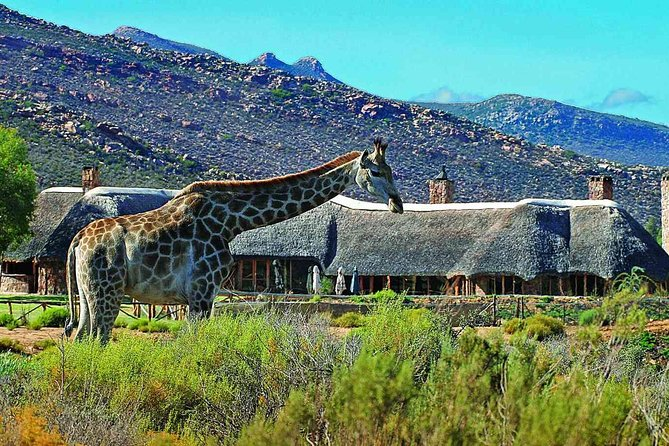 Big 5 Safari Private Transfers To Aquila Park excluding entrance fees