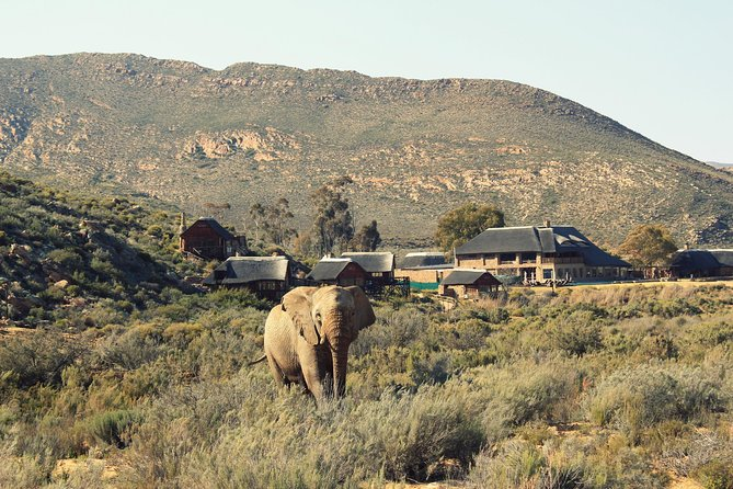 3 Day Luxury Aquila Private Game Reserve