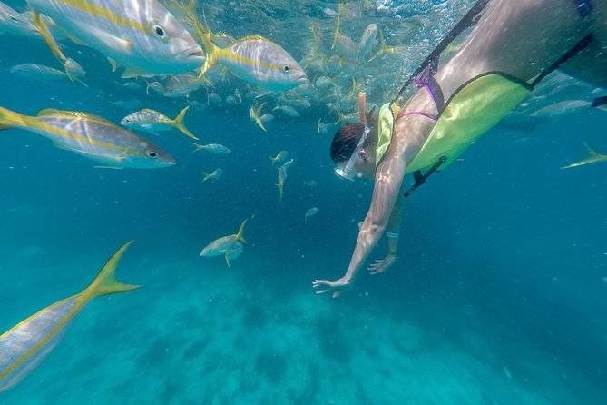 Key West Florida Reef Half-Day Snorkeling Excursion