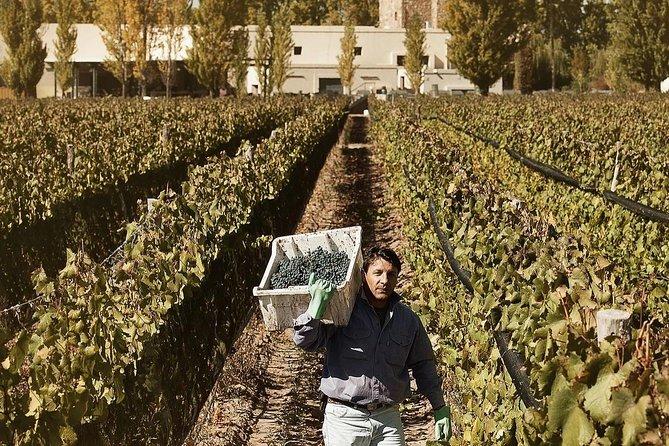 Experiencia en Bodega Renacer, Mendoza, ARGENTINA