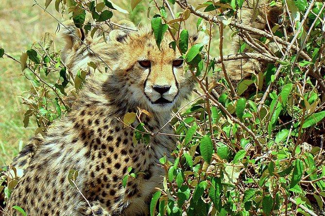 7 Days Lake Nakuru, Masai Mara, Naivasha, Amboseli
