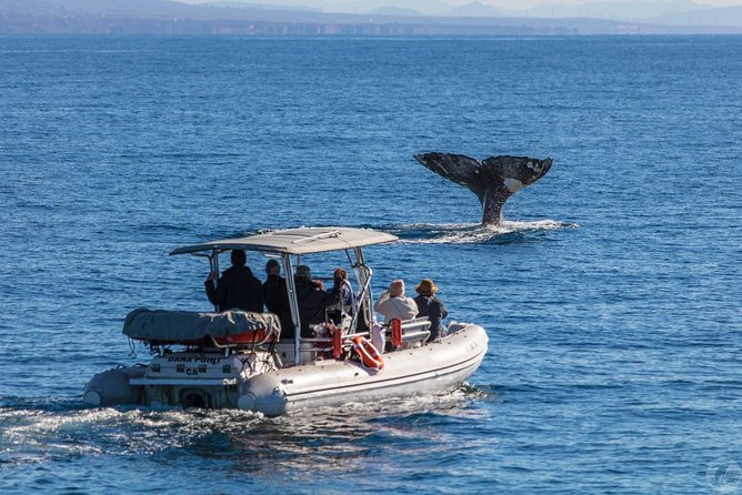 High Speed Zodiac Whale Watching Safari from Dana Point photo 1
