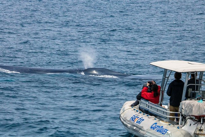 High Speed Zodiac Whale Watching Safari from Dana Point photo 2
