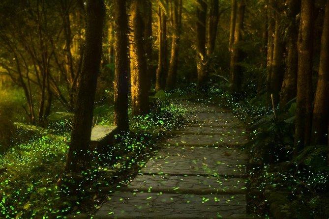 Fireflies Sanctuary, Culinary Experience,1-night at Historic Hacienda Hotel