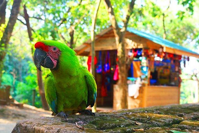 Mayan Eden Eco Wildlife Park, City Tour & Private Transfer