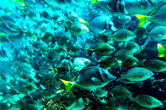 Private. Snorkeling Experience from Huatulco HT