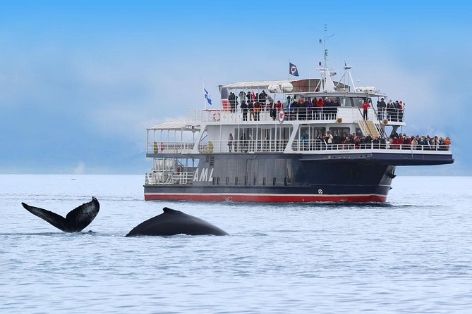 Whale Watching Cruise & Fjord fromTadoussac or Baie Sainte Catherine