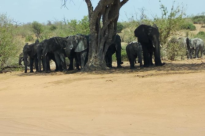 Chobe Day Trip from Livingstone, Zambia photo 6