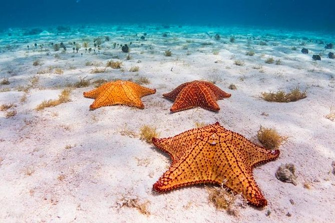 VIP Yacht Snorkeling, Shipwreck, Starfish, Transfer Included photo 3