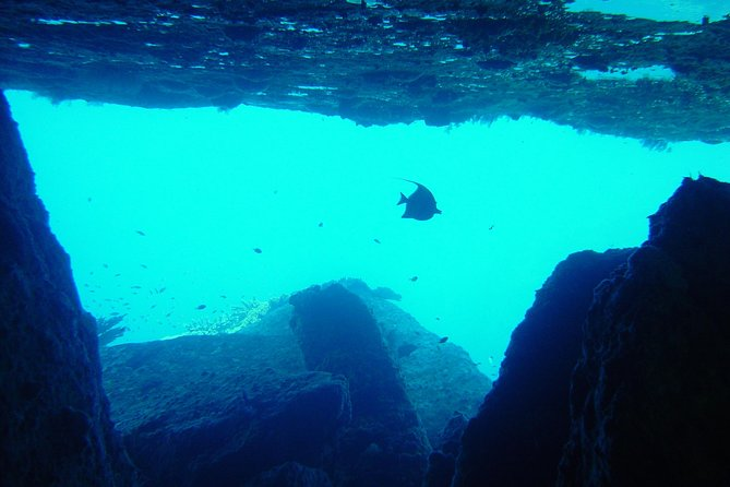 2-Day Similans Scuba Diving from Phuket photo 2