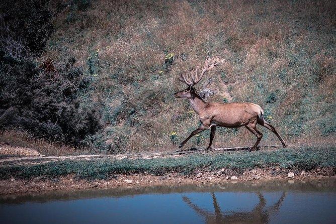 Wild Range Deer Off-Road Observation