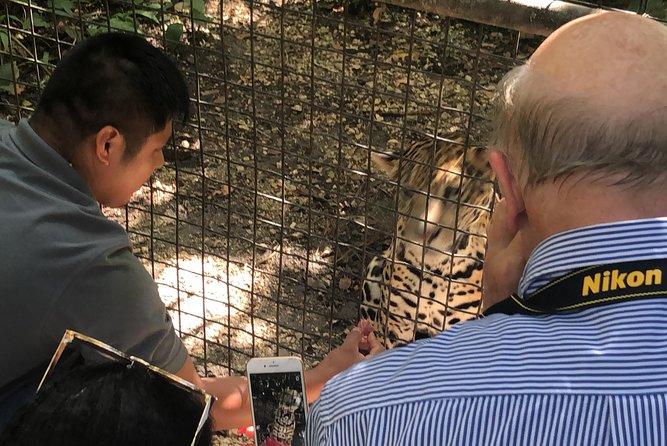 Le zoo de Belize avec la rencontre de jaguar