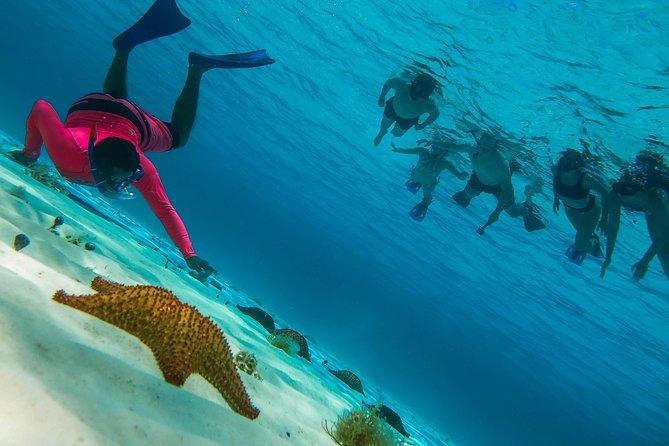 Cozumel Snorkeling tour by Boat & El Cielo Beach