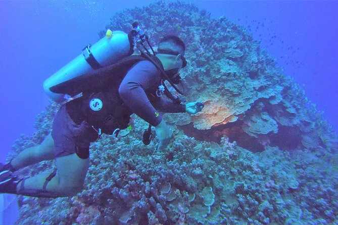 Wreck Dive 2 Tanks (Open Water Diver Certification Required)
