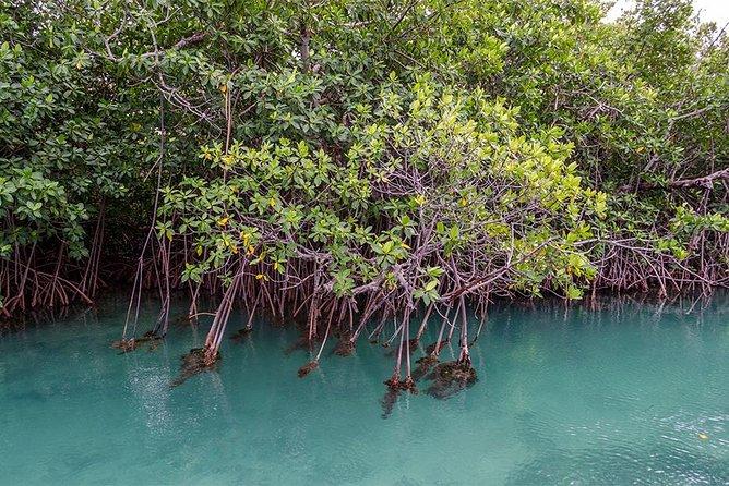 Nichupte Lagoon Wildlife Tour