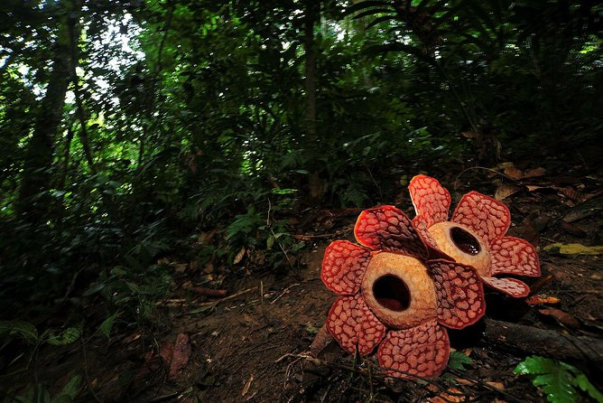 Kota Kinabalu Rafflesia Rainforest Reserve Tour photo 3