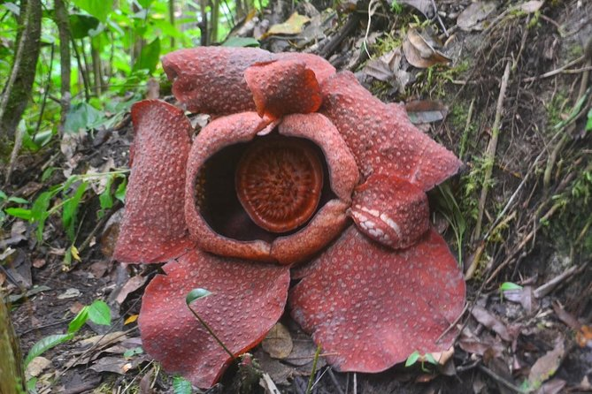 Kota Kinabalu Rafflesia Rainforest Reserve Tour photo 2