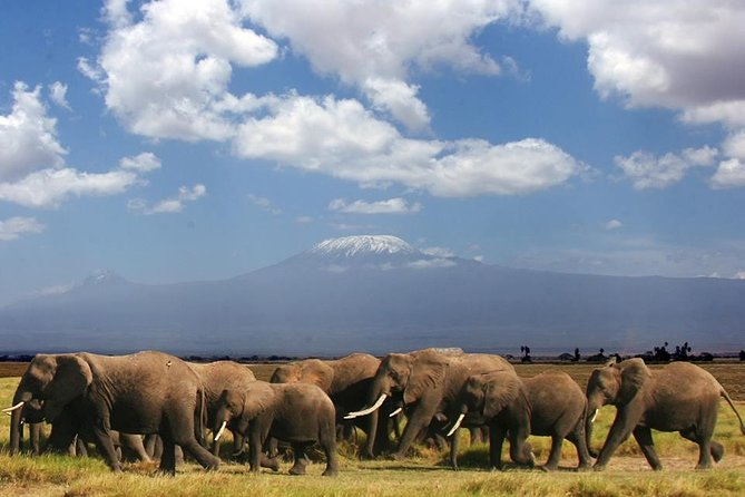 3-Day Nairobi to Amboseli Safari
