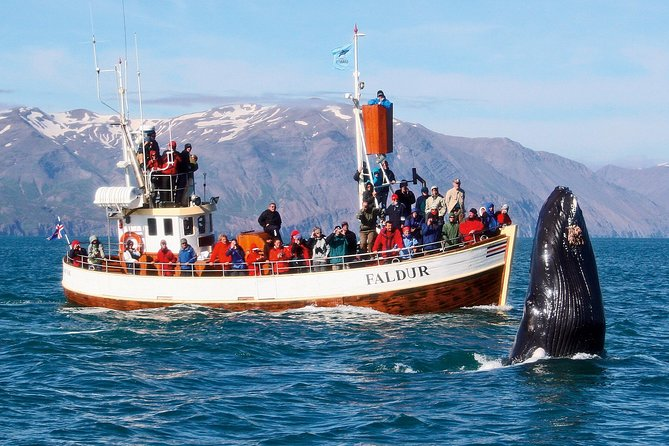 Traditional Whale Watching Tour from Húsavík photo 9