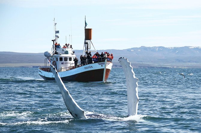 Traditional Whale Watching Tour from Húsavík photo 3