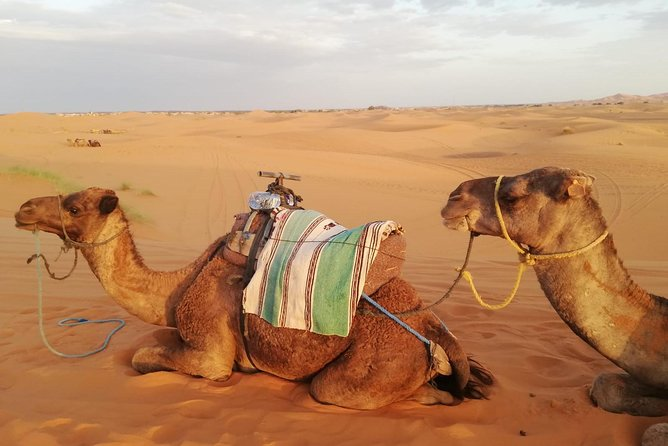 Trip to the Desert from Fes to Fes via Merzougua (2days, 1night)