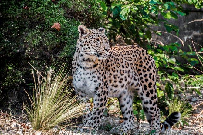 Yala National Park Private Safari Tour - Customize tour