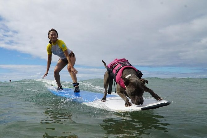 Surf with a Service Animal