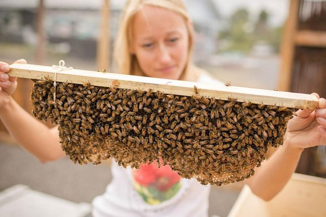 Kona Tour: Coffee Plantation, Kealakekua Bay, Kaloko-Honokohau Park, and Bee Farm