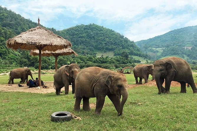 Full Day Elephant Nature Park Tour from Chiang Mai