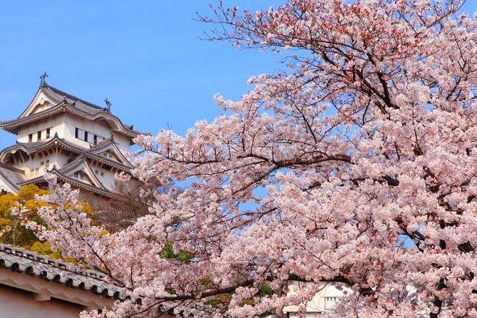 Excursão gastronômica no Osaka Spring Daytime (Cherry Blossom)