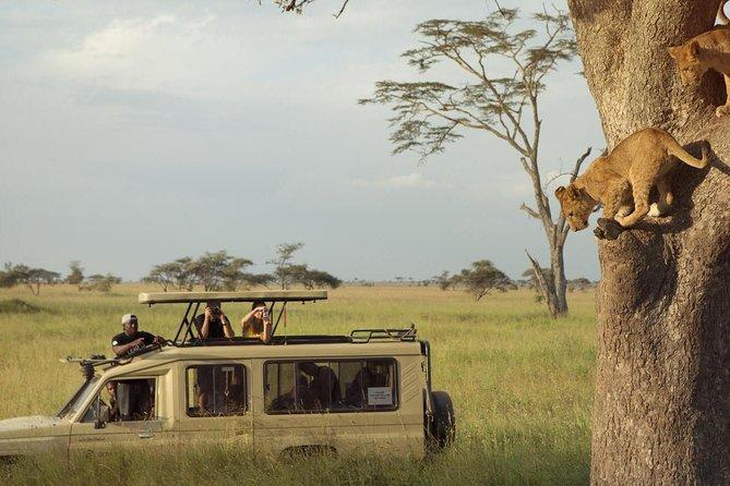 3-Days Safari to Tarangire, Ngorongoro Crater & Lake Manyara