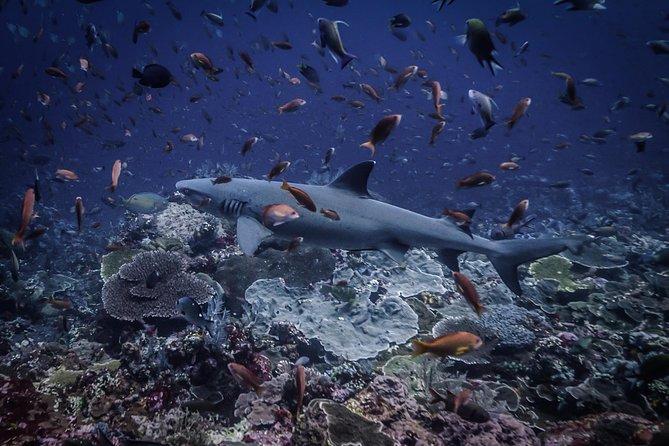 Scuba Dive Komodo National Park - 2 dives (certified divers)