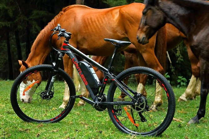 Horse Riding Experience in Limuru, Kenya