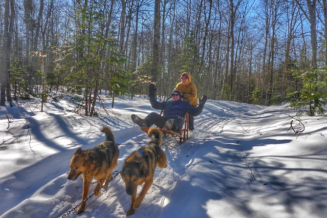 Dog Sledding Adventure from Toronto Private Tour