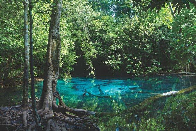 Ao Thalane - Discover the mangrove life
