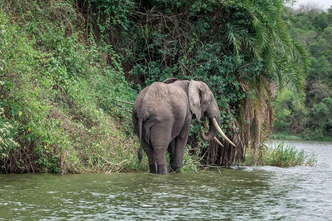 An elephant spotted from the boat cruise
