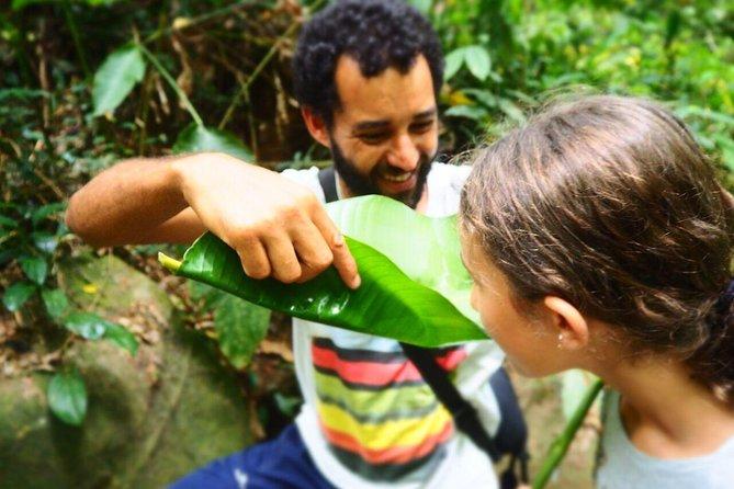 Forest Forager - Wild Food Walk