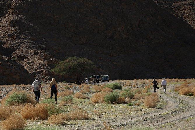 Wadi El Gemal - Safari and Trekking