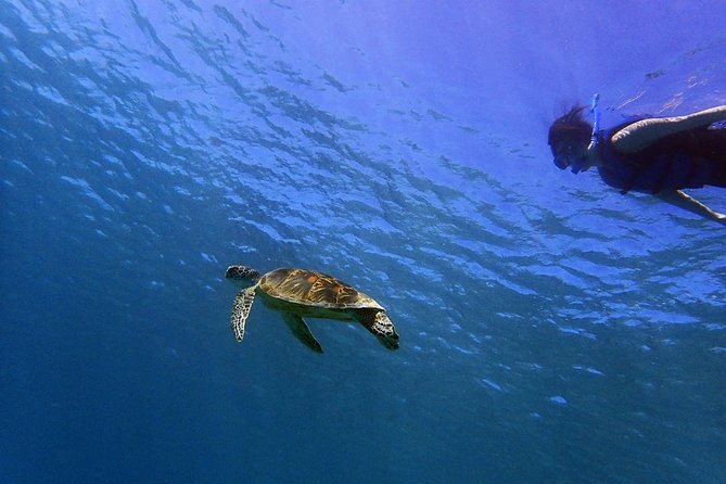 Guam's Top Rated Guided Snorkeling Tour!