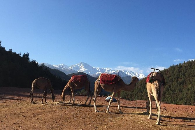 Atlas Mountains Day Trip From Marrakech 3 Valleys & Berber Villages & Camel Ride photo 12