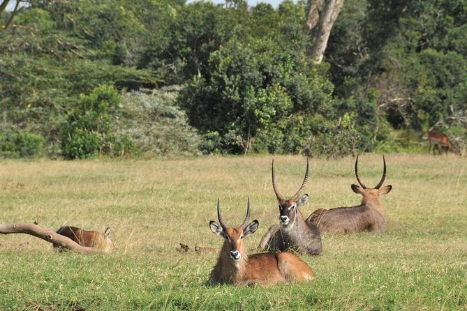A Ol Pejeta 3 Day Safari And A Trip To Ngare Ndare Forest Reserve Mid Range photo 16