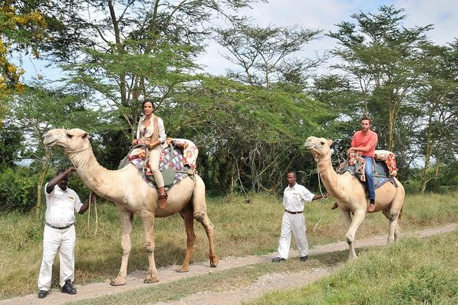 A Ol Pejeta 3 Day Safari And A Trip To Ngare Ndare Forest Reserve Mid Range photo 4
