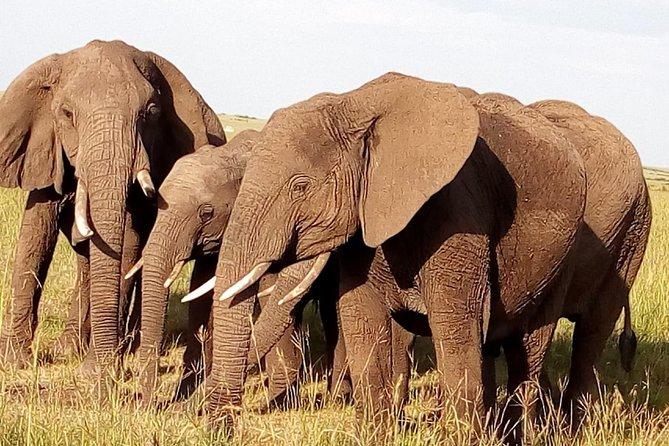 9 Days Kenya & Tanzania Group Tour: Budget & Mid-Range Hotels